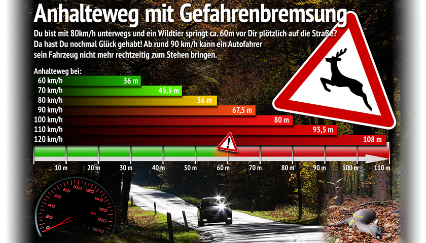 Bremsweg und Anhalteweg beim Wildunfall